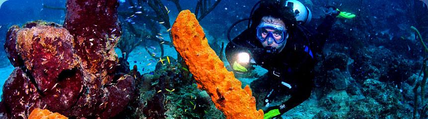 snorkelingandecotours